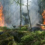 ディカプリオが放火の寄付金を調達?アマゾン消火ボランティアが放火!