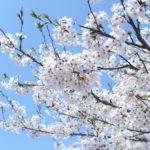 ジャパンライフ桜を見る会で全国福利厚生共済会と一緒に冊子で勧誘
